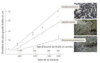 lichens - Lecidea promiscens - Aspicilia cinerea - Rhizocarpon geographicum