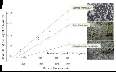 thalles moraine - lichens
