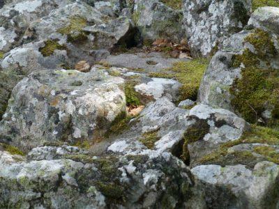 lichens - lichens rochers