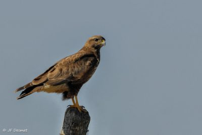 buse - buse variable