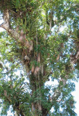 arbre foret amazonie - foret amazonie - amazonie