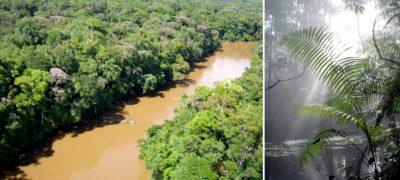 riviere comte guyane - foret guyane - amazonie - foret amazonie