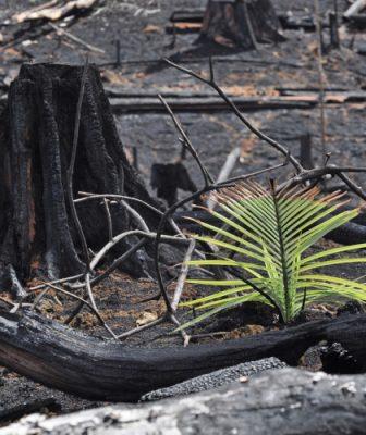 brulis sur abattis - deboisement amazonie - deforestation amazonie - amazonie