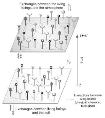 schema natural forest ecosystem