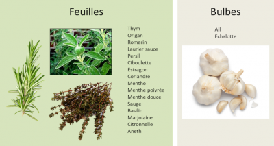 herbes aromatiques - spices - herbs