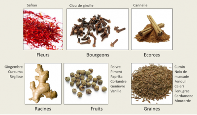 eipces - organes vegetaux epices - spices - herbs