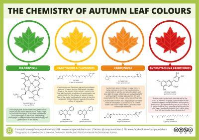 pigments feuilles automne - couleurs feuilles automne