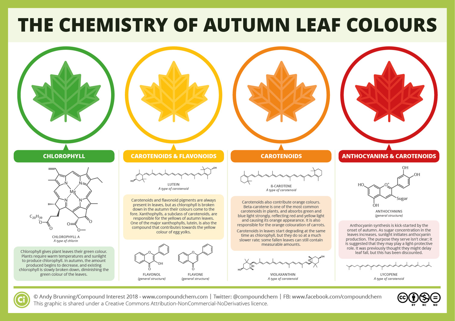The colour of leaves - Encyclopedia of the Environment