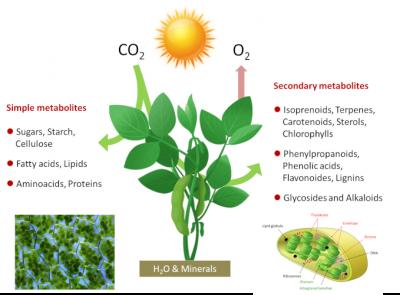 photosynthesis scheme