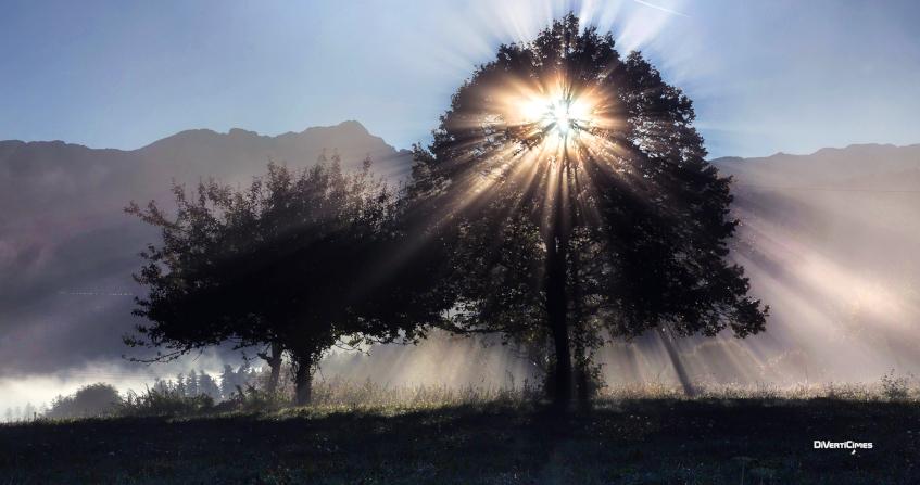 photosynthese - nature - lumière arbre