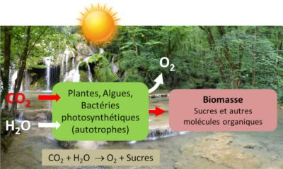 photosynthese - schema photosynthese