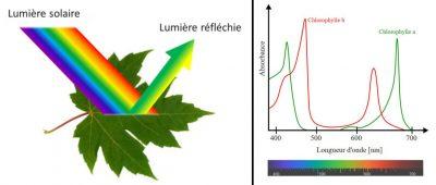 longueurs d'ondes - couleurs longueurs ondes - couleurs lumiere - lumiere - photosynthese - chlorophylles