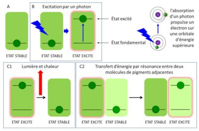 schema photosynthèse