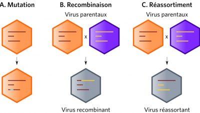 adaptation virale - mecanismes moleculaires adaptation virale - pandemie virale - pandemies origine