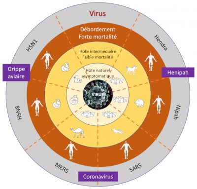 pandemies - pandemies virales - danger pandemies - interaction hote pathogene pandemies- covid19 coronavirus pandemie