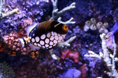 环境百科全书-缓慢而强大的洋流环境-鱼与珊瑚