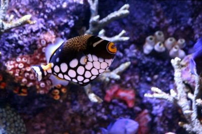 poisson - poisson ocean - diversite marine - biodiversite marine