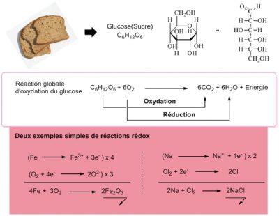 sucr glucose schema