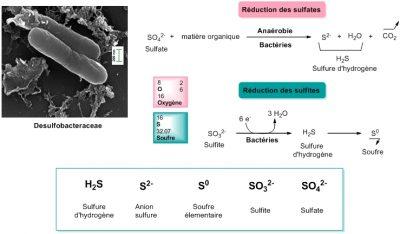 sulfates - sulfites - sulfites
