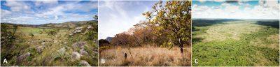 savane - savanes - paysages savanes - savanes amerique du sud