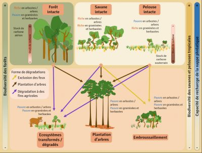 ecosysteme savane - incendies savane - degradation forets et savanes - deforestation schema