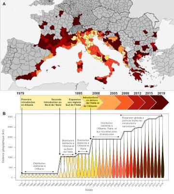 expansion moustiques tigres europe - moustiques tigres europe carte