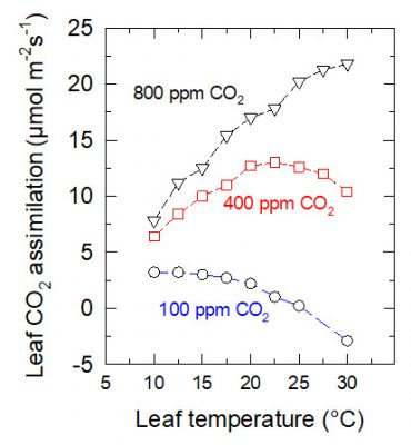 assimilation CO2 photosynthesis