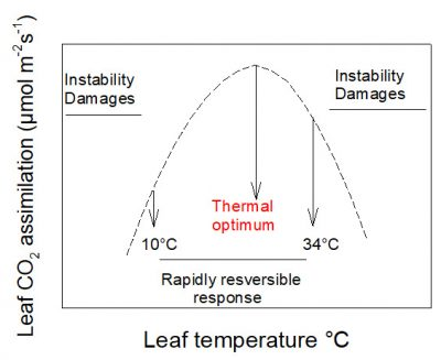 photosynthesis assimilation CO2