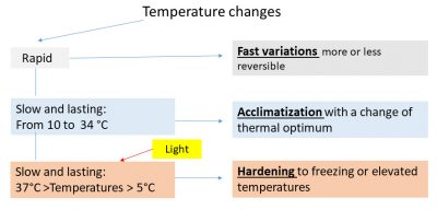 photosynthetic temperature effects