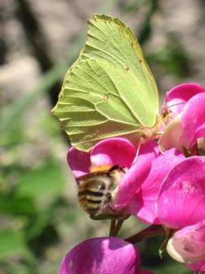 bees adaptations climate change