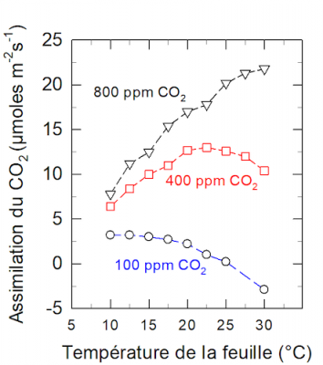 Assimilation CO2 photosynthèse