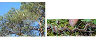 caterpillar climate change