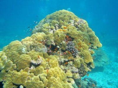 Construction of coral polyps reefs