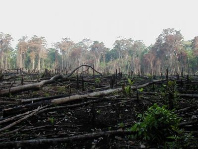 Deforestation extinction mammals
