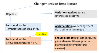 effets temperatures photosynthese