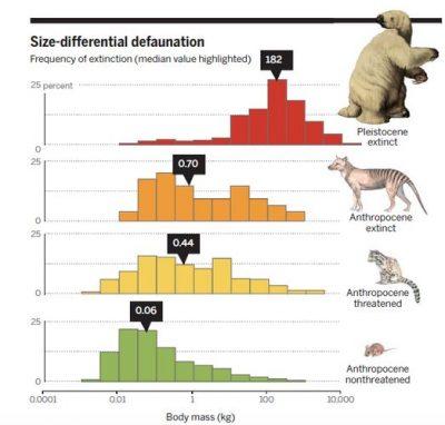 extinction mammals global changes