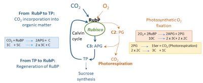 fixation CO2 O2 plant