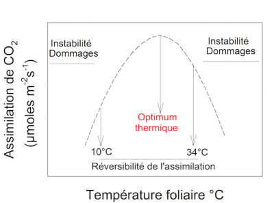 Photosynthèse assimilation CO2