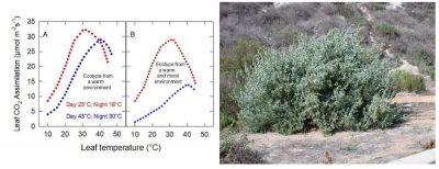 photosynthesis medium hot cool
