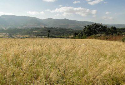 tef biodiversité pays sud