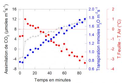 Temperature feuille CO2