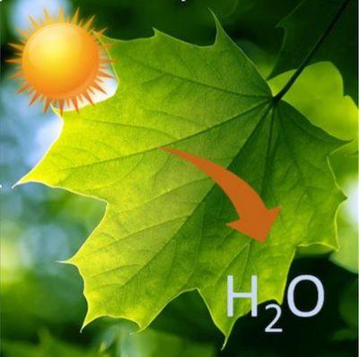 Temperature feuille protection chaleur