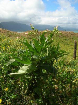 biodiversity global change tobacco