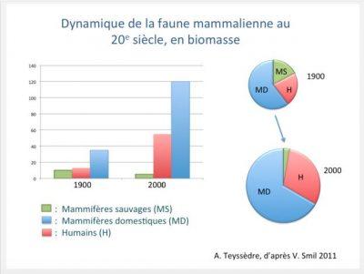mammals biomass variation