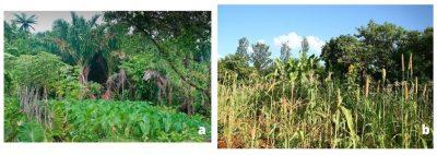 biodiversité diversité culture