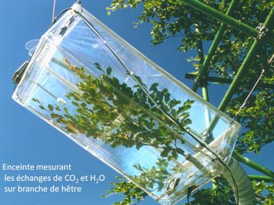 dispositif branche co2 h2o plantes