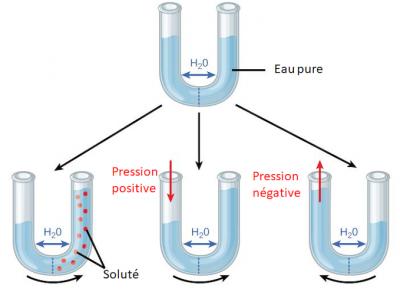 tube semi permeable eau