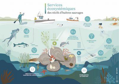 services ecosystemiques récifs biogeniques huitres